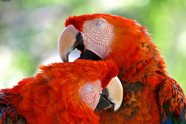 """""""Amor natural"""". Foto: Oscar Ordenes"""